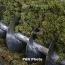 Արարատի մարզի խաղողագործները բեռնատարներով փակել են մայրուղին