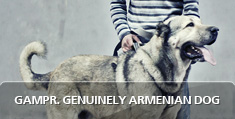 Gampr - Genuinely Armenian Dog