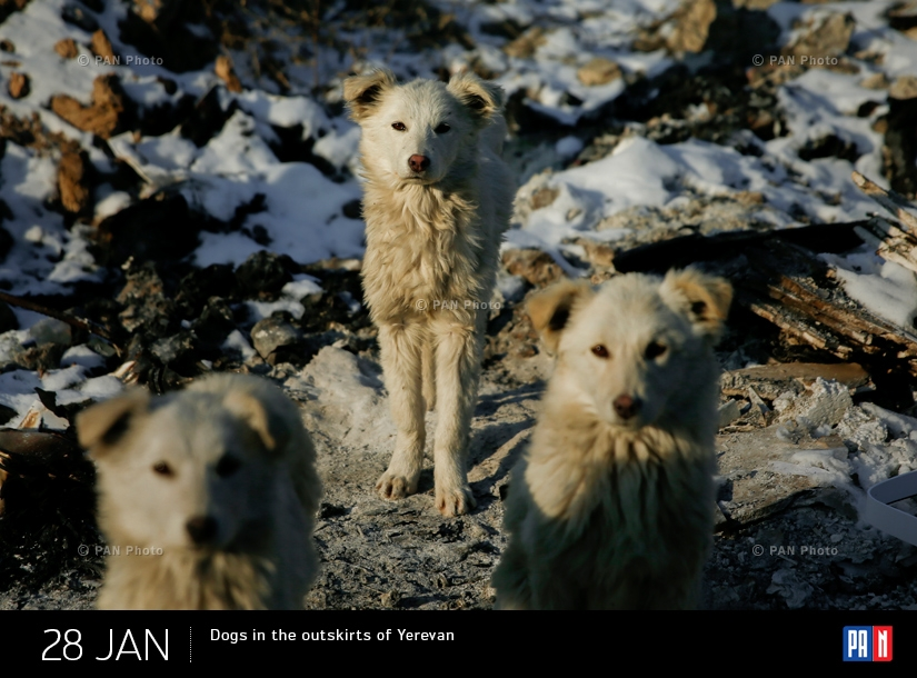 Dogs in the outskirts of Yerevan