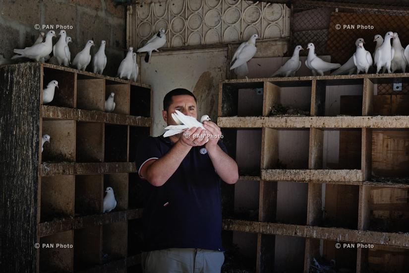 Yerevan Stories. Երևանի աղավնապահները