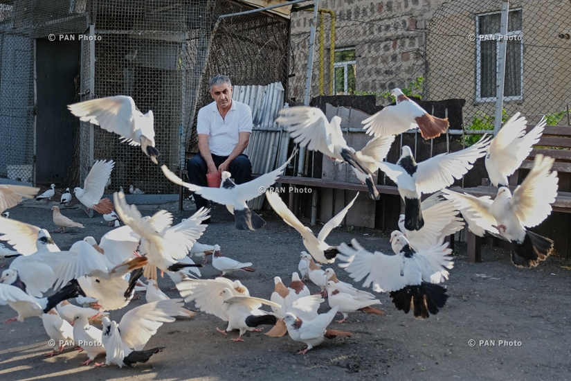 Yerevan Stories: Pigeon fanciers of Yerevan