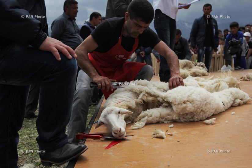 Фестиваль стрижки овец в Татеве