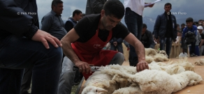 Sheep Shearing Festival in Tatev