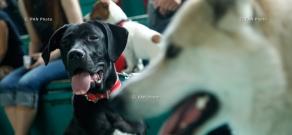Международная выставка собак всех пород «Лучи Армении» 2014