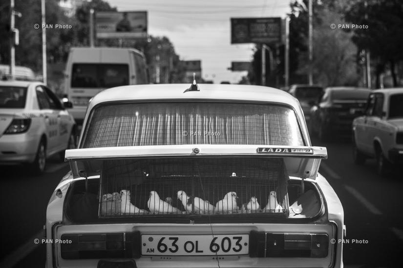 Transporter of Doves. Yerevan, Armenia