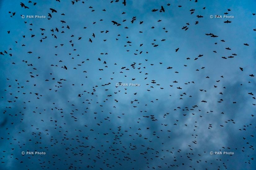 Birds flying over the evening sky. Yerevan, Armenia
